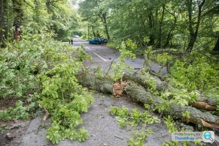 Kallis viis puid langetada